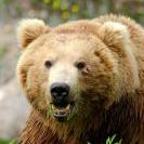 Bear_Baby_Bear