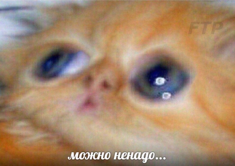 mozhno-nenado-mem-3.jpg
