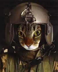 de71e48c8af18d2dbc74ce0e3ac14827--soldiers-salute.jpg.37fce5e15c28746ec241db71ba55a196.jpg
